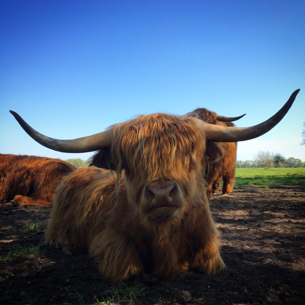 Highlands van Drenthe