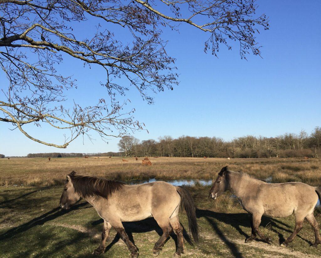 Paarden op het Eexterveld